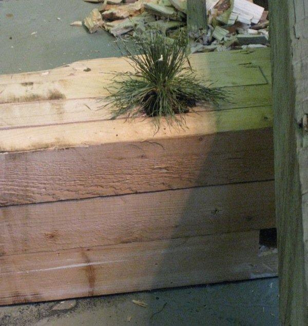 Der gror små rigtige græstottet hist og pist. Foto Kasper Lie