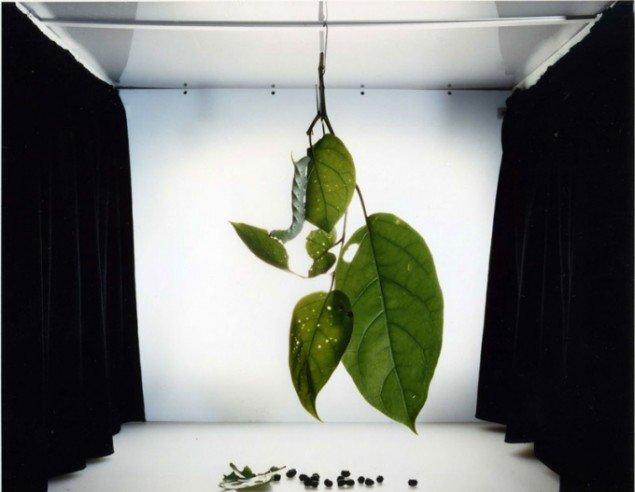 Sanna Kannisto: Sphingidae: Maduca pellenia (2004) . (Pressefoto)
