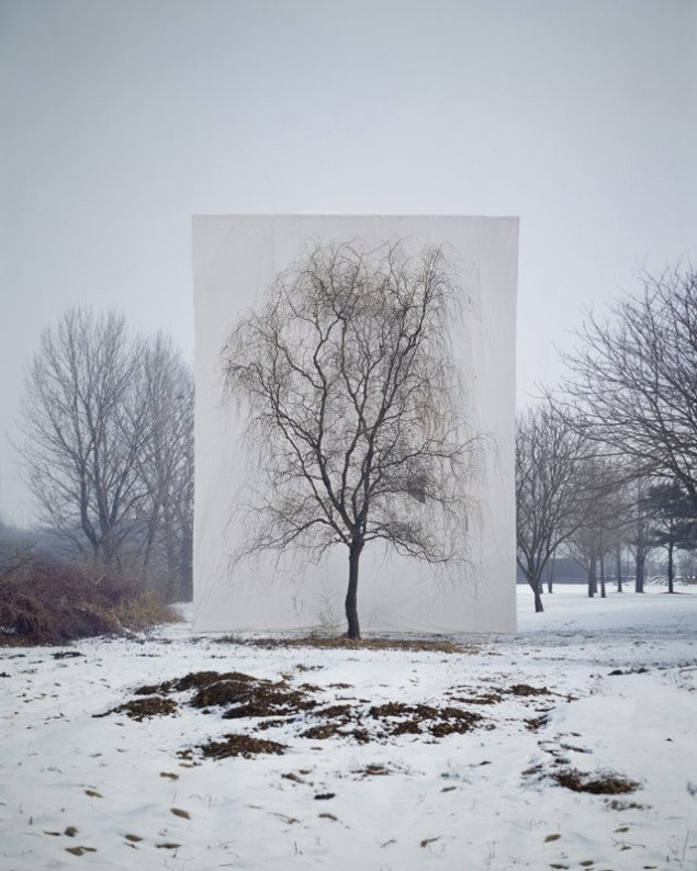 Myoung Ho Lee: Tree #3, 2006. (Pressefoto)