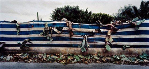 Henrik Saxgren, Cactus Stuff, Almeria, Spain, 2006, Fotografi.