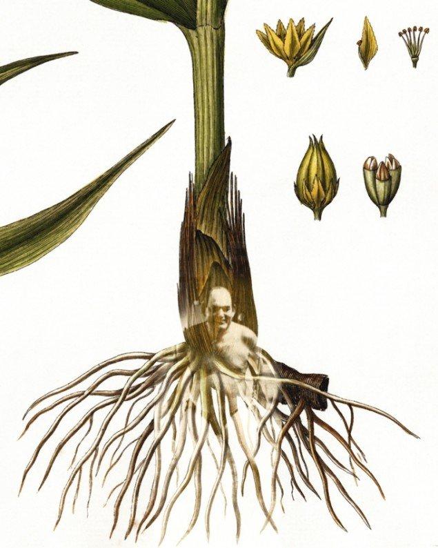 Fra Peter Holst Henckels Flora Danica III-serie, hvor Mogens Glistrup stikker frem.  Pressefoto.