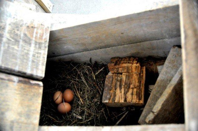 Redekasse med æg i Halilajs skulptur (Foto: Gurli Sørensen)