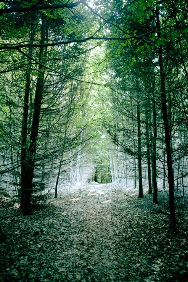 Udsnit af Den hvide skov med Katrine Wiedemanns scenografi. Pressefoto.