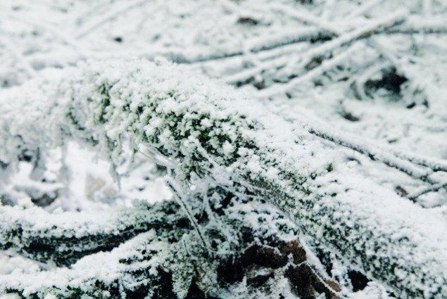 Tæt på Den hvide skov. Pressefoto.
