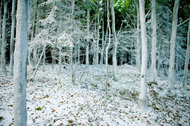 Udsnit af Den hvide skov. Pressefoto.