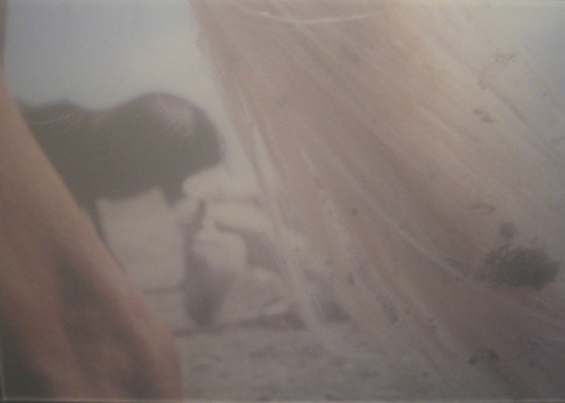 Michelle Eistrup: Wild as the Wind. Foto: Signe Ullerup
