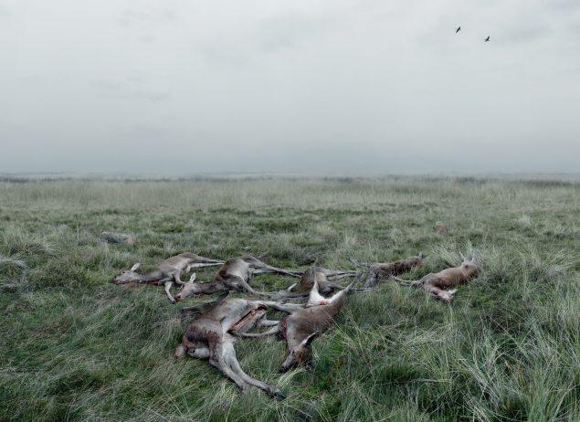 Morten Barker: Døde krondyr: Udsigt mod Grærup Langsø, 2013. © Morten Barker