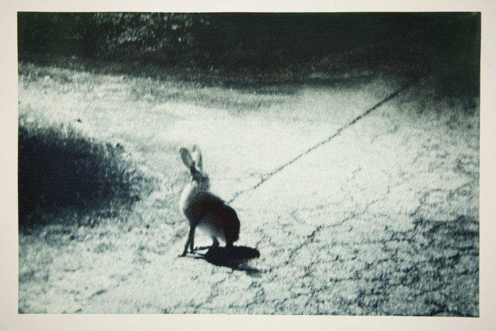 Maj-Britt Boa: Hare ved nat II (Udsnit), 2015. Foto: Maj-Britt Boa