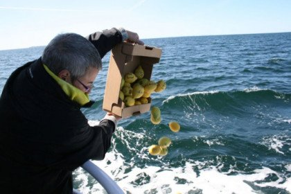 Citronsejlads på Kattegat