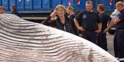 Strandet hval bruges til kunstprojekt