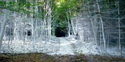 Den hvide skov – en forgængelig forestilling