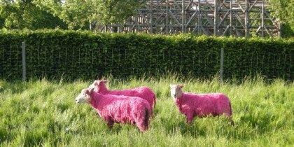 Kan lyserøde får hamle op med barok geometri?
