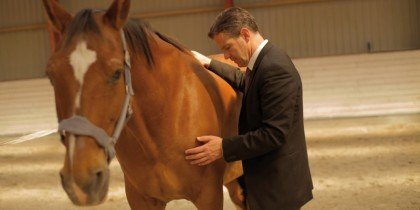 Jakkesæt blandt heste