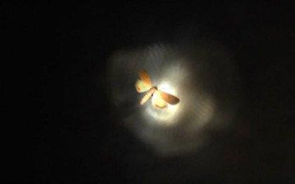 Jagten på natsværmeren