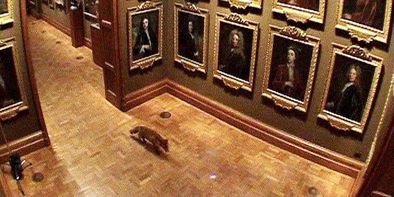 Når ræven går på museum
