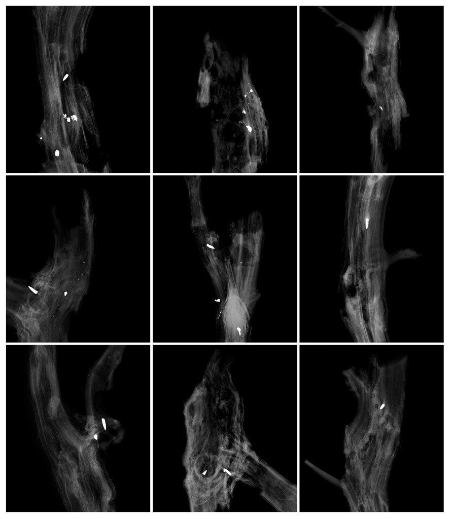 Morten Barker: Røntgenfotografi af projektilets aflejring i træstammer, 2013