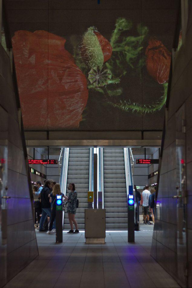 Også under jorden kunne du finde kunst. Her er det Eva Kochs valmue, der folder sig ud i en videoprojektion på Nørreport metrostation. Foto: Philipp Loeken