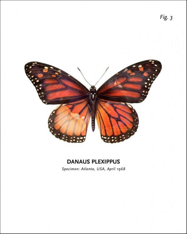 Peter Holst Henckel: World of Butterflies, 1992-2003. Foto: Arken