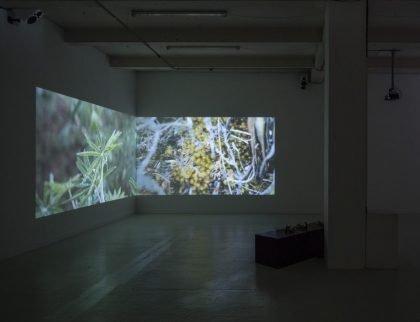 Stille botanik og soldatersange med kunstneren i centrum