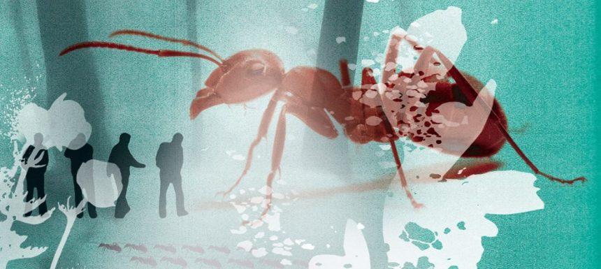 Tag med ind i myrernes og ulvenes verden