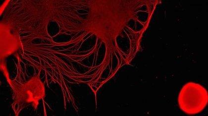 Kunstforskerne III: Pernille Leth-Espensen: Kunstneriske interventioner i bioteknologien