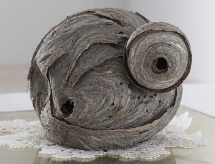 Pernille Egeskov: BELONGING – Vendsyssel Kunstmuseum
