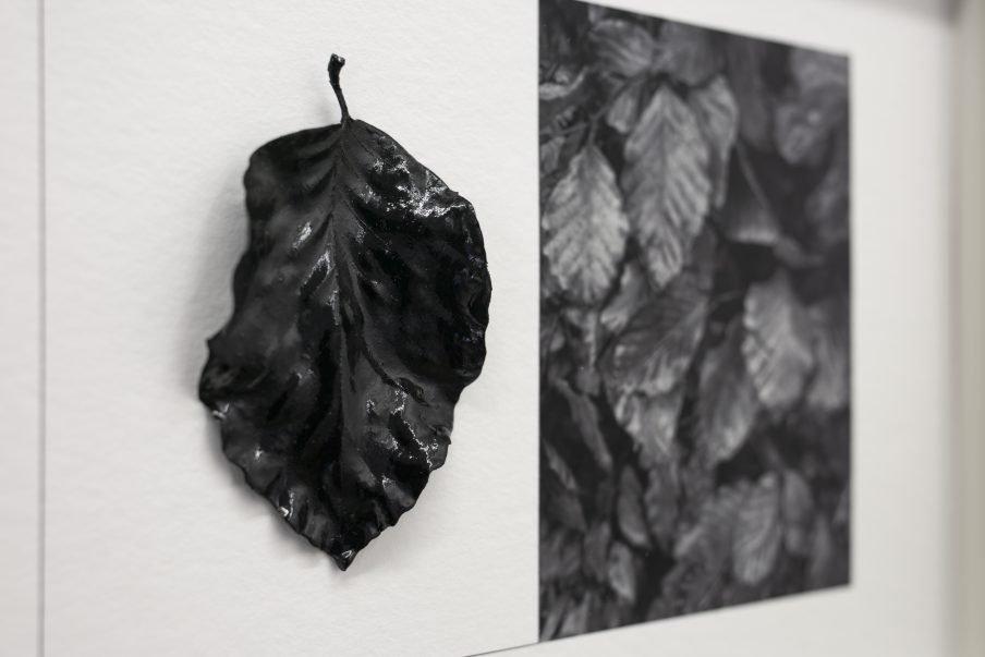 Jacob Juhl: The Square Root of Nature – Galleri HØJBJERG & SIMMELSGAARD