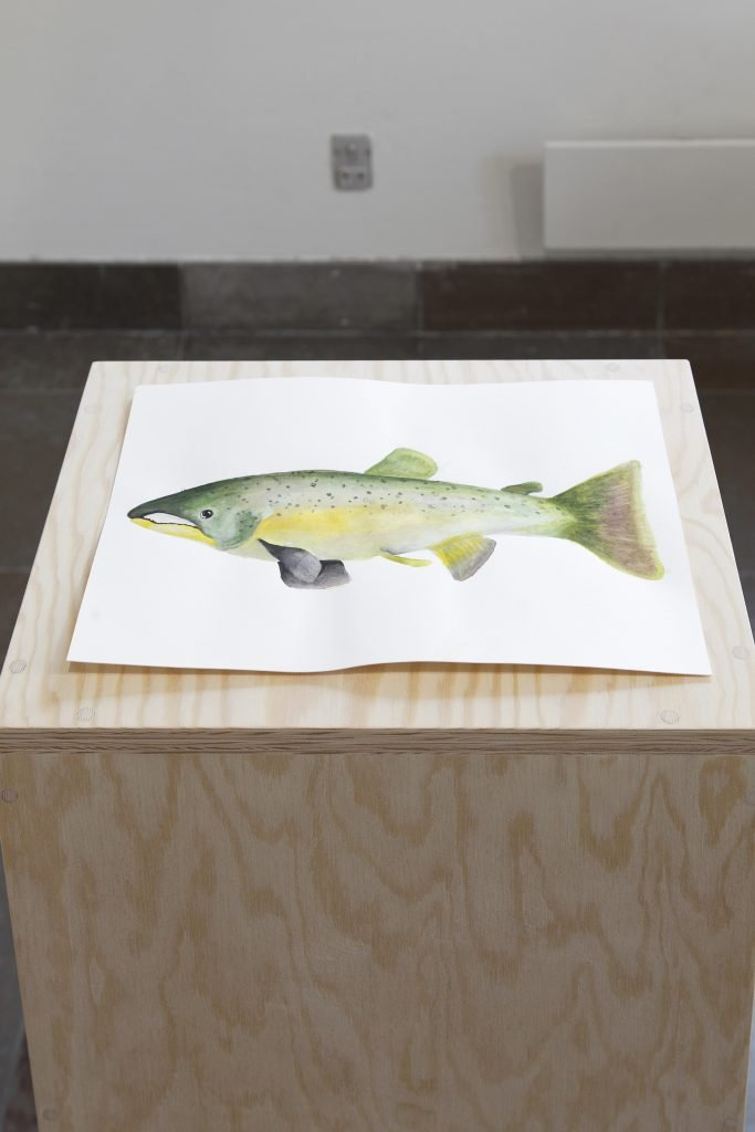 Calder Harben: Listening to (a) Future: Lake Ontario Atlantic Salmon, 2021. Foto: Kevin Malcolm.