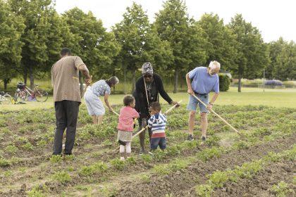 Dahn Vo på Nivaagaard. Nu skal der høstes kartofler!