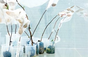 Moving Plants / Planter i bevægelse
