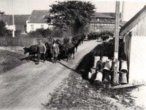 Hvis fotografier kunne tale… Historiske fotos af Johannes Hage