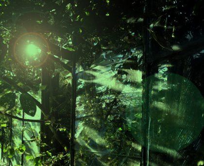 Signe Klejs: The Greenhouse
