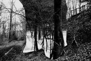 Sergei Sviatchenko: Nature Matter