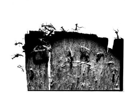 Bjerget synger – Lydkunstner Knud Viktor og hans verden