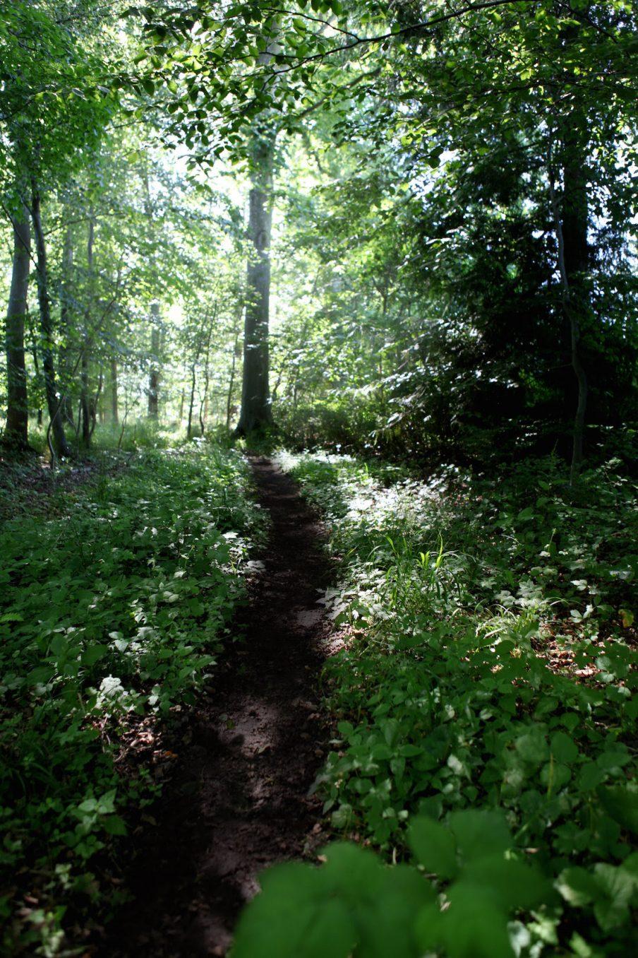 Rune Bosse: Stien eller tid imellem træer