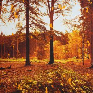 Ulrik Crone: Natura Obscura
