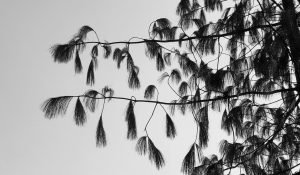 Ebbe Stub Wittrup: Botanical Drift