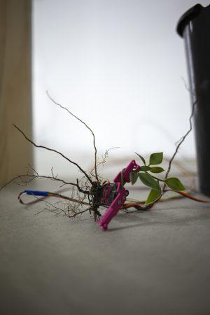 Jacob Juhl: The Square Root of Nature
