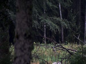 Stine Kvam: Da dyret mødte jægeren i skoven – da jægeren mødte skoven i dyret – da skoven mødte dyret i jægeren. En jagthistorie om perception