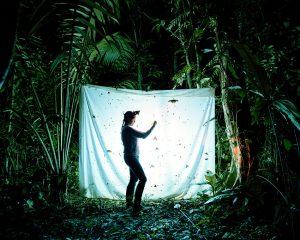 Langt Ude i Skoven (På opdagelse i naturen)